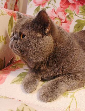 猫为何有九条命
