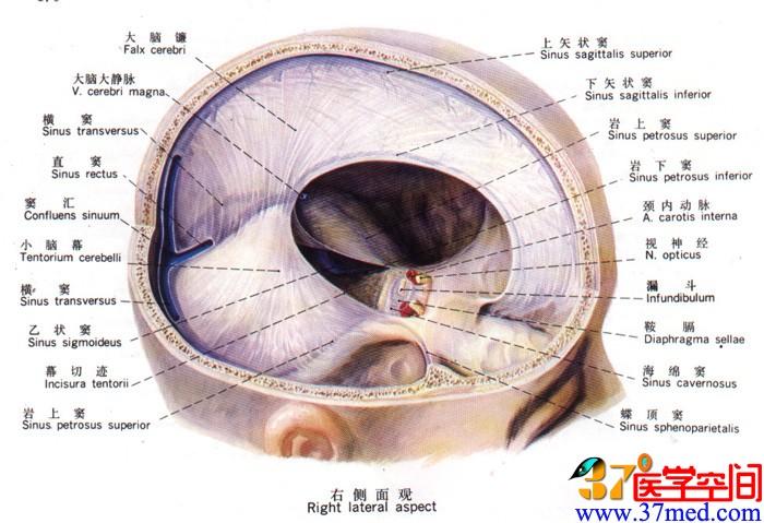 脊髓解剖结构图解