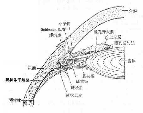 眼球的解剖结构