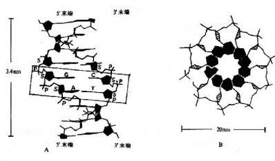 皮肤附属器结构图