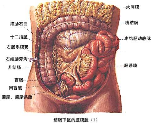 大肠的结构图教学图片