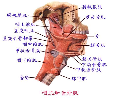 解剖学基础理论-医学教育网