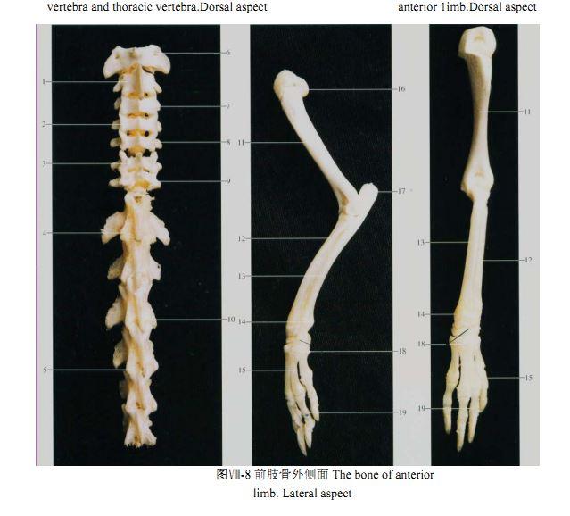 大鼠和小鼠解剖图谱