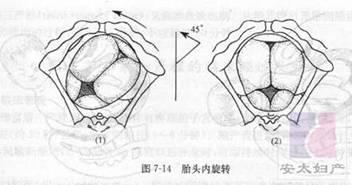正常分娩—执业医师考试历年真题解析(妇产科)