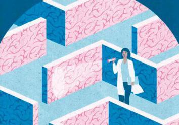男性和女性的大脑是否明显不同?