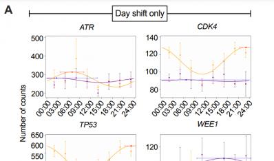 夜班工作是如何增加癌症风险的?